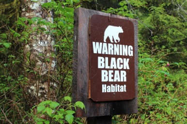 No sign of bears.