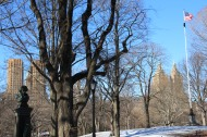 Just Central Park