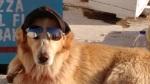 Cool puppy