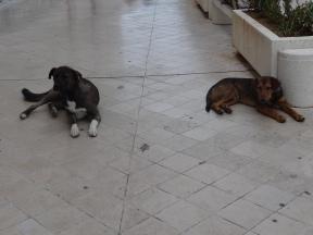 Mostar's friendly street dogs